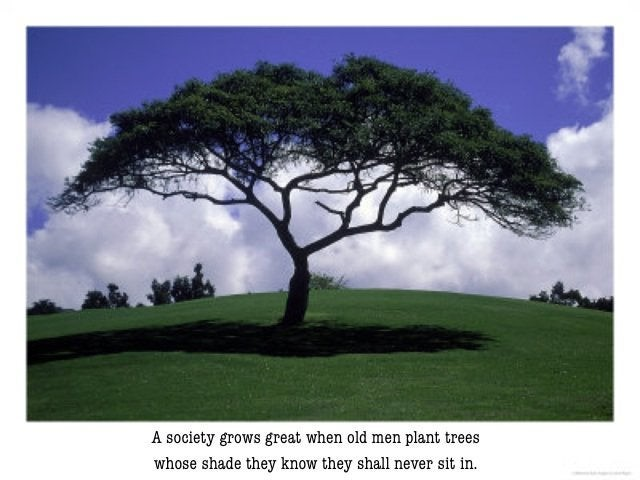 A photo of a tree growing on a field of grass. Underneath it says: A society grows great when old men plant trees whose shade they know they shall never sit in.